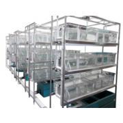 Modułowe systemy hodowlane dla żab wymagające filtracji centralnej