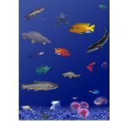 Systemy hodowlane dla innych gatunków
