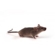 Mysz C3H/J (JAX™), C3H/HeOuJ